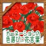 母の日にカーネーションの花束を!色選びや花言葉を詳しく