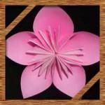 折り紙の桜の簡単な折り方!立体的な桜の作り方を紹介