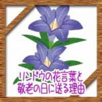 リンドウの花言葉の由来や怖い意味?敬老の日に送る理由が…