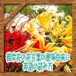 彼岸花(曼珠沙華)の花言葉の意味由来に黄色白は?英語の読み方は