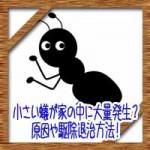小さい蟻が家の中マンションに大量発生?原因や駆除退治方法!
