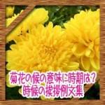 菊花の候の意味読み方に時期はいつからいつまで?時候の挨拶例文集