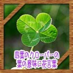 四葉のクローバーの葉の意味に花言葉!五つ葉との違いになぜできる?