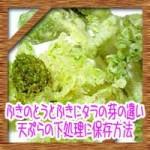 ふきのとうとふきにタラの芽の違い!天ぷらの下処理に保存方法