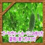 ゴーヤグリーンカーテン(緑のカーテン)の作り方!栽培に育て方のコツ