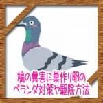 鳩の糞害に巣作り卵のベランダ対策や駆除方法!100均グッズで鳩よけ!