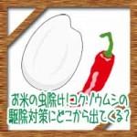 米びつお米の虫除け!コクゾウムシの駆除対策にどこから出てくる?
