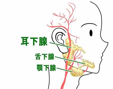の 押す と 痛い 耳 後ろ